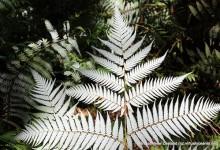 新西兰银蕨签证 Silver Fern Visa 永久关闭