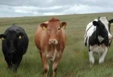 新西兰的牛肉NZ Beef
