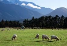 带您知道一些新西兰的基本知识