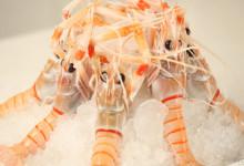 新西兰南极小龙虾Scampi