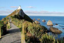新西兰南岛努盖特角 Nugget Point