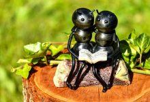 新西兰蚂蚁 Pōpokorua