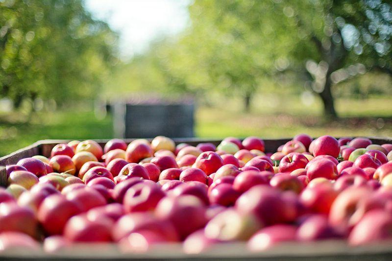nz-apple-industry-knowledge