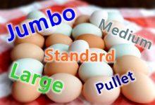 新西兰的鸡蛋尺寸标准