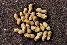 新西兰生产的高油酸花生和高油酸花生酱