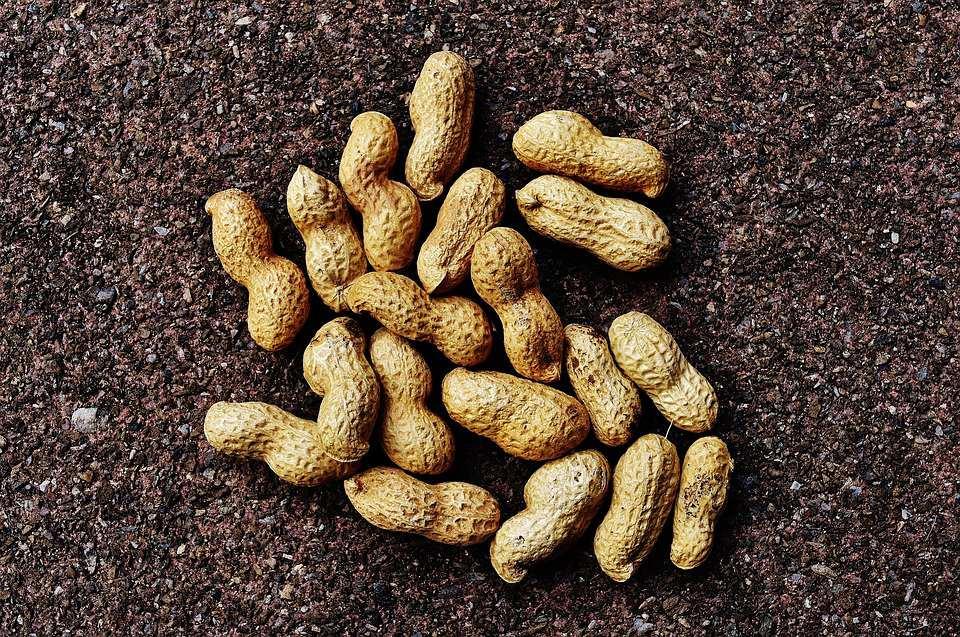 nz-hi-oleic-peanut