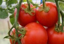 为什么新西兰冬天西红柿很贵?