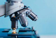 新西兰公立大学微生物学专业 Microbiology