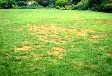新西兰花园草皮的补种
