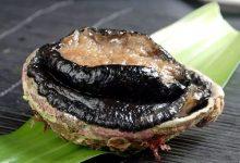 每个人每天能在新西兰合法捕捞多少只鲍鱼?