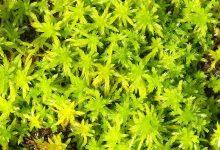 新西兰花园盆栽泥炭土 peat moss