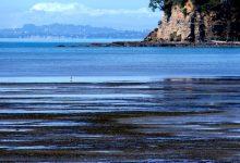 如何在奥克兰莎士比亚公园的海湾捡拾鸟蛤?
