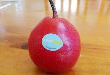 新西兰红梨 Piqa Boo Pears