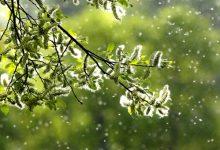 新西兰九月份容易导致过敏的花粉