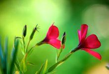 花园肥料之钾肥 Potash