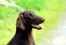 新西兰夏季预防宠物狗中暑