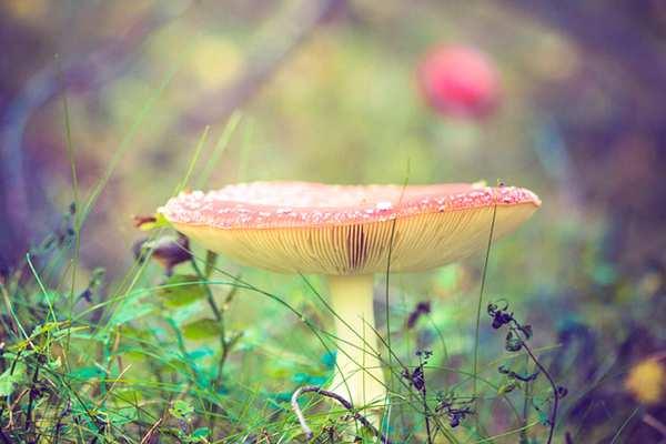psilocybin-magic-mushroom