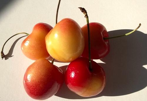 rainier-cherry