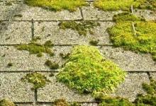 如何清除房顶上的青苔?