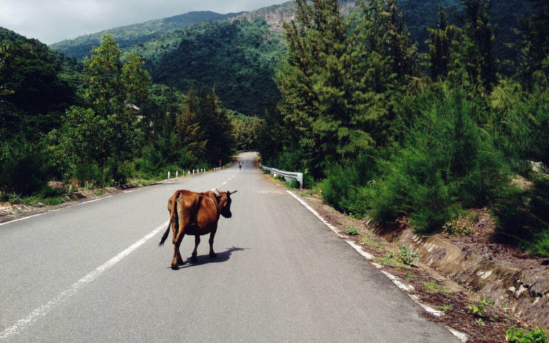 report-wandering-animal-to-111-on-open-road