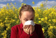 新西兰遍地黑麦草是你花粉过敏的主要原因