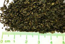 新西兰毒品 Salvia