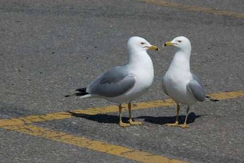 seagull-hangout-at-parking