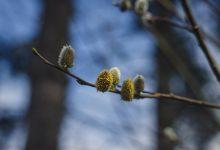 新西兰季节性过敏 Seasonal sniffles