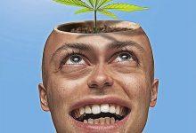 新西兰合法化大麻被否决,又要投票去刑事化?
