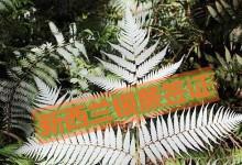 2014年度新西兰银蕨签证申请