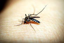 新西兰蚊子叮咬后的处理和止痒方法