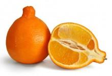 新西兰橘柚Tangelos