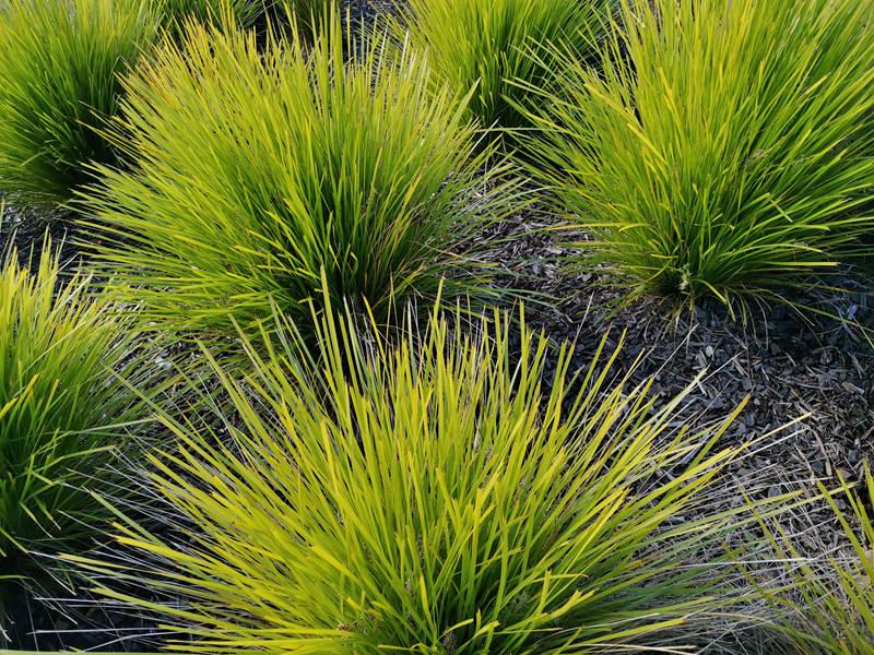 tanika-basket-grass