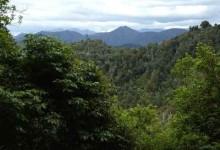 新西兰国家公园TeUrewera