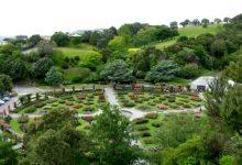惠灵顿诺伍德夫人玫瑰园 Lady Norwood Rose Garden