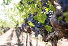 """英语俗语""""小道消息"""" through the grapevine"""