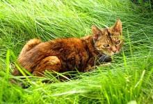避免邻居家猫在自家花园中排泄的几个办法