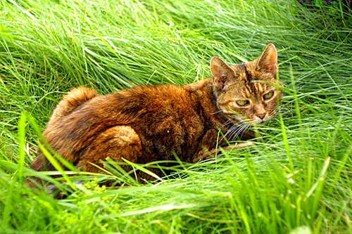 tips-for-keeping-cats-away-from-your-lawn