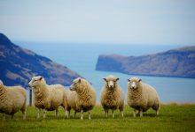 新西兰旅游花费大约是多少?