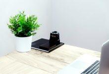 如何去除室内盆栽植物上的霉菌