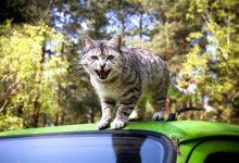 如何在新西兰处理猫抓伤