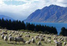 新西兰的单一行政管理区 Unitary authority