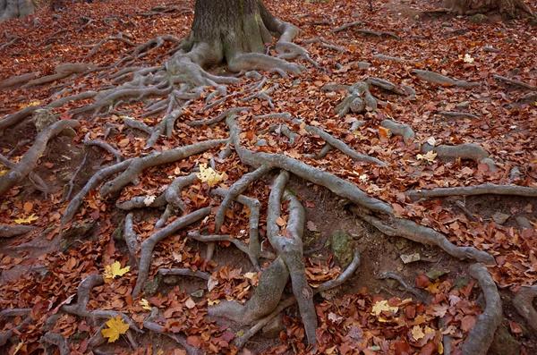 use-diesel-kills-tree-roots
