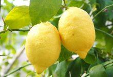 使用柠檬清洁微波炉内部