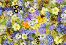 如何施肥让新西兰自家后花园的花朵更鲜艳?