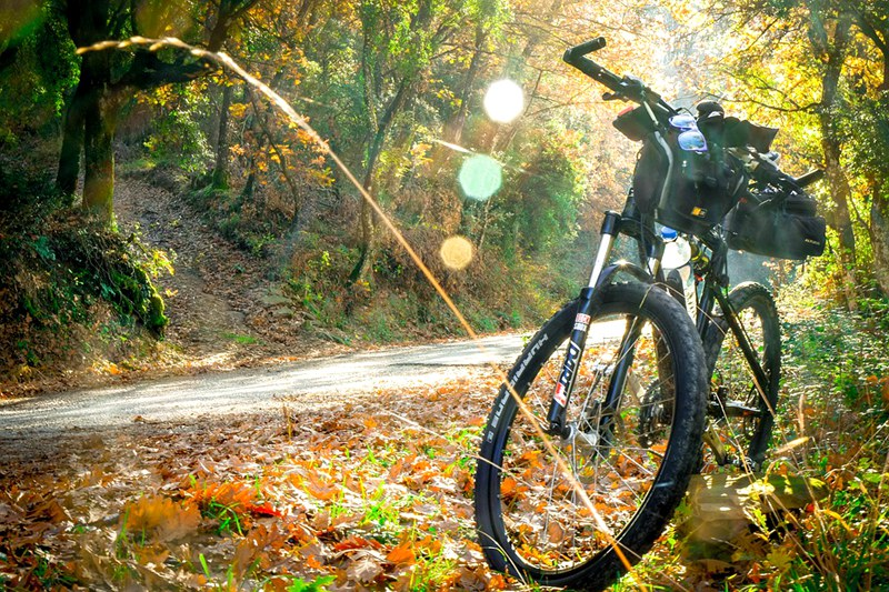 waikato-river-trails