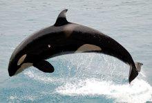 新西兰海域中常见的鲸鱼种类