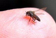 新西兰沙蝇会在什么条件下叮咬人类?