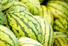 新西兰的西瓜产自哪里?