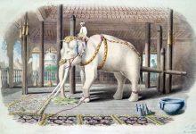 """有趣的英语俚语""""白象"""" white elephant (华而不实)"""